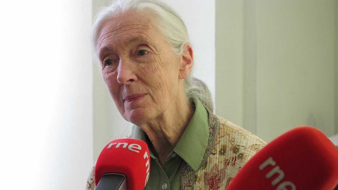 Vida verde - Jane Goodall y los santuarios de Chimpancés - 21/01/17 - escuchar ahora