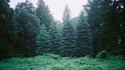 El bosque habitado - Renacer tras el desastre. Lección de la Naturaleza. Con Joaquín Araújo - 22/01/17 - escuchar ahora