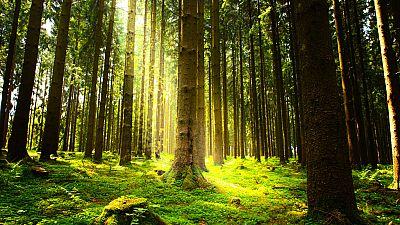 El canto del grillo - Un bosque con matrícula de honor - Escuchar ahora