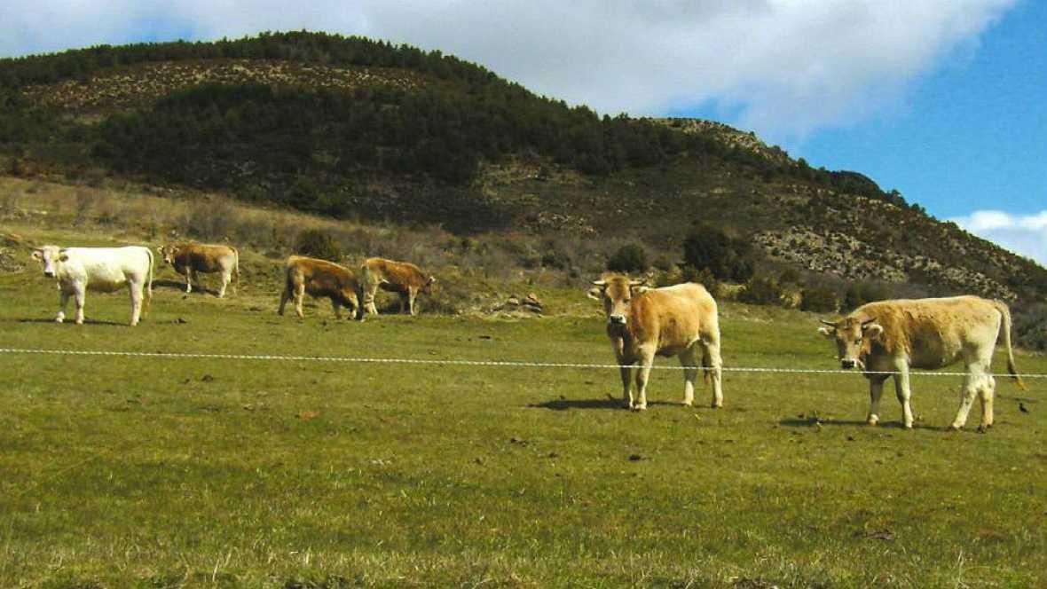 El mundo de la carne -  Bienestar animal en la granja - 11/02/17 - Escuchar ahora