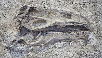 Lógica paleontológica - Mejores trabajos de investigación paleontológica - 24/02/17 - Escuchar ahora