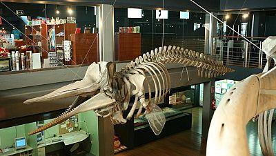 Marca España - Visitamos el Museo Marítimo del Cantábrico - escuchar ahora