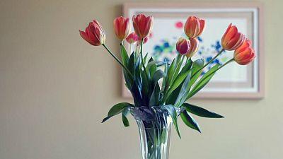 No es un día cualquiera - Ser florero - Escuchar ahora