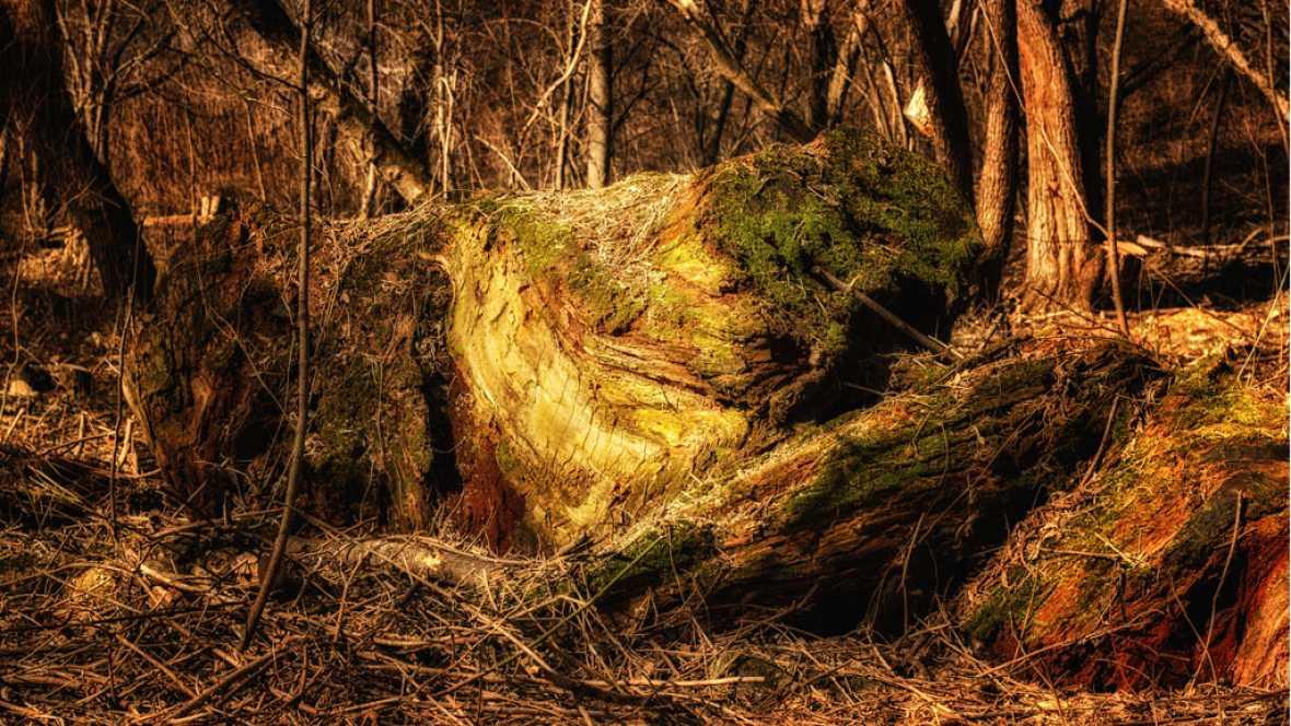 A hombros de gigantes - Los neandertales se medicaron con 'aspirinas' y antibióticos - 13/03/17 - Escuchar ahora