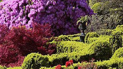 Vida verda - Camèlies i Spiritual Landscapes