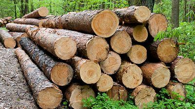Vida verde - Lo que el bosque nos da - 25/03/17 - escuchar ahora