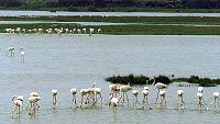 Documentos RNE - Parques Nacionales Españoles, red de biodiversidad - 25/03/17 - escuchar ahora