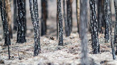 España vuelta y vuelta - La sequía y los incendios en España - 25/04/17 - Escuchar ahora