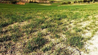 Agro 5 -  La sequía distancia al Mapama y a los agricultores - 20/05/17 - Escuchar ahora