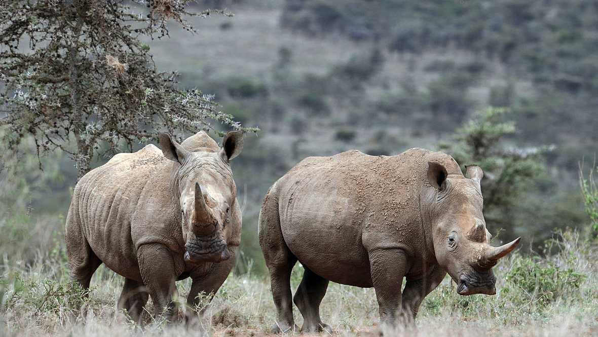 Cajón de músicas - Rinocerontes - 21/05/17 - Escuchar ahora