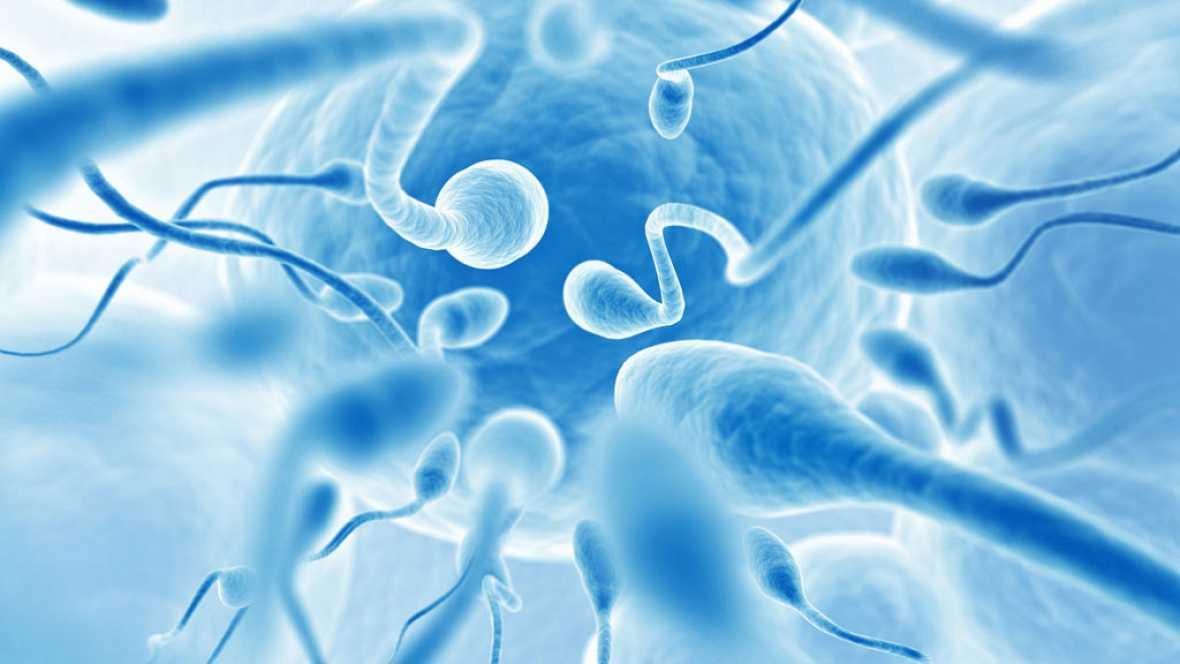 A hombros de gigantes - Del óvulo fecundado al individuo: el enigma de la vida - 12/06/17 - Escuchar ahora
