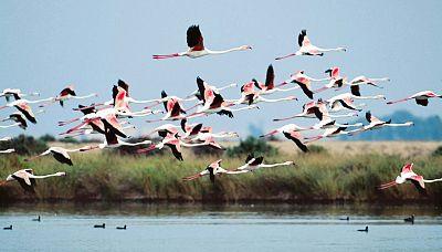 Marca España - La Unesco duplica la Reserva de la Biosfera de las Marismas del Odiel - 29/06/17 - escuchar ahora