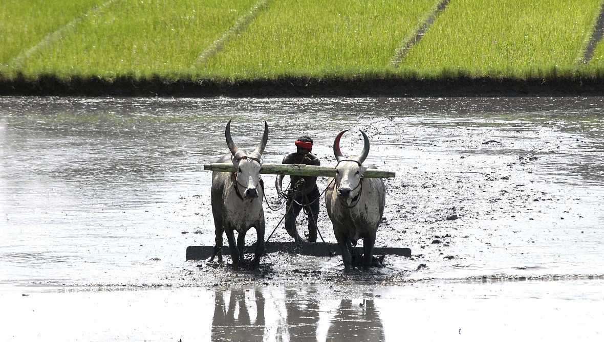 Sumando esfuerzos - Agricultura y soberanía alimentaria - 29/07/17 - escuchar ahora