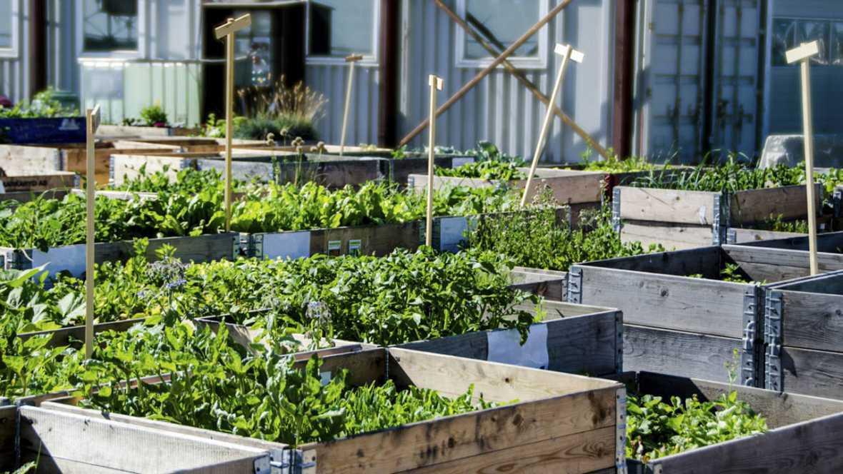 Vida verde - Beneficios del huerto urbano - 29/07/17 - escuchar ahora