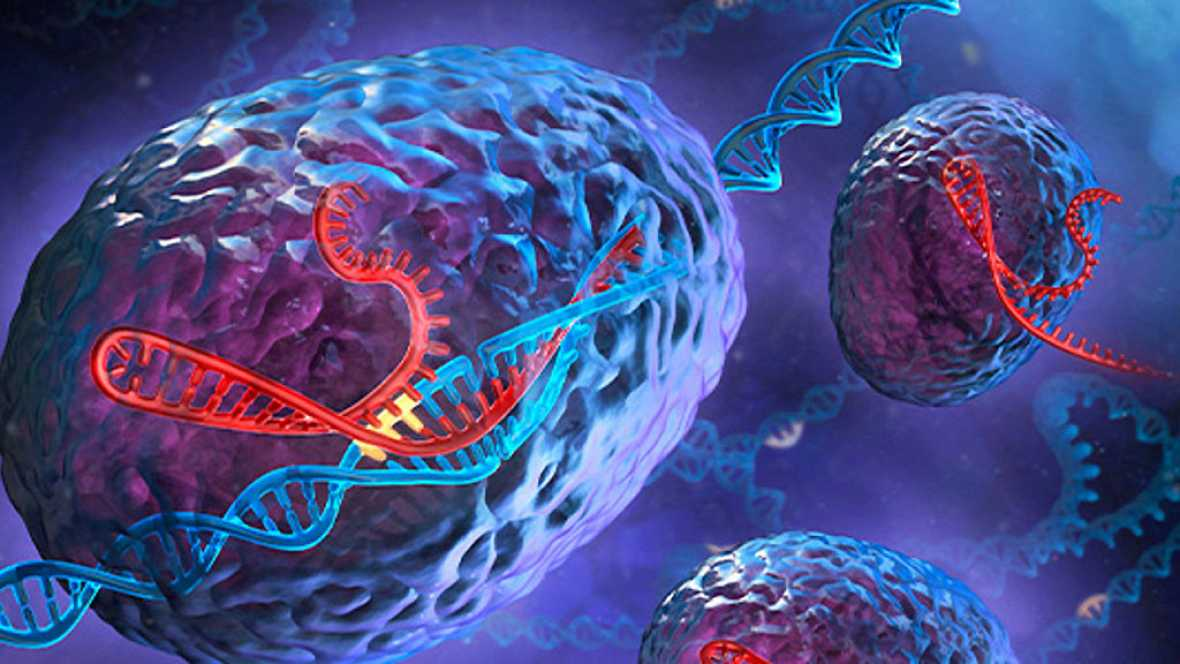 A hombros de gigantes - Entrevista al profesor Martínez Mojica, descubridor de CRISPR - 04/09/17 - Escuchar ahora