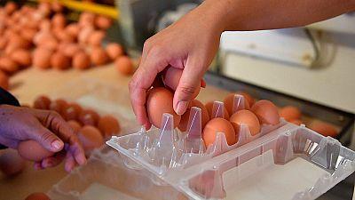 Inmovilizan una partida de 20.000 unidades de huevo líquido contaminado con fipronil en una empresa de Bizkaia