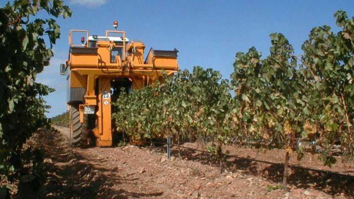 Agro 5 - Vendimia de calidad y autocontrol en el aceite de oliva - 16/09/17 - Escuchar ahora