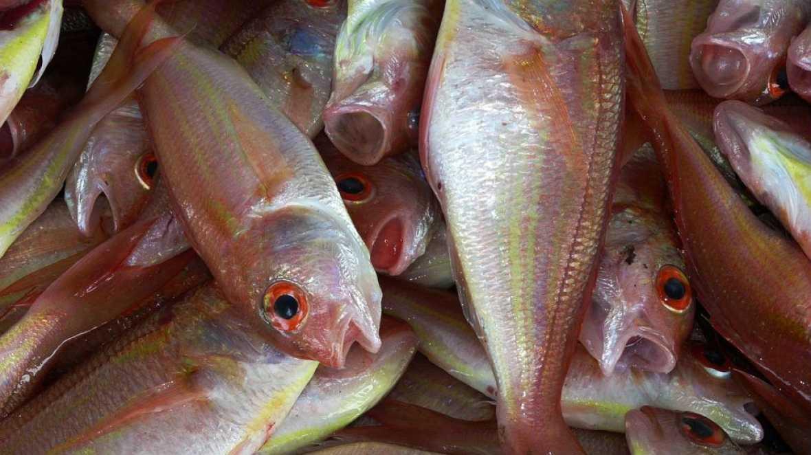 Alimento y salud - Riesgos del pescado. Las judías - 24/09/17 - Escuchar ahora