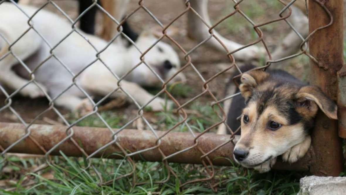 Entre paréntesis - Las preocupantes cifras del maltrato animal - Escuchar ahora