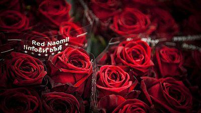 El canto del grillo - La mejor rosa del mundo se cultiva en Soria - Escuchar ahora