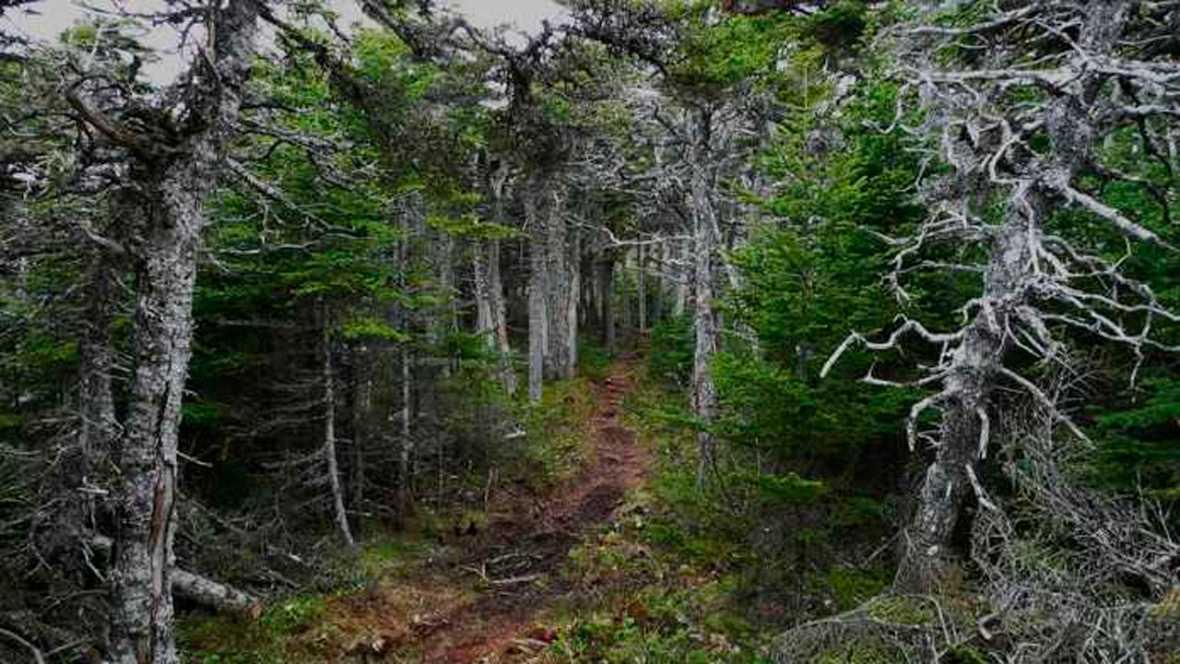 El bosque habitado - La Tierra respira - 22/10/17 - escuchar ahora