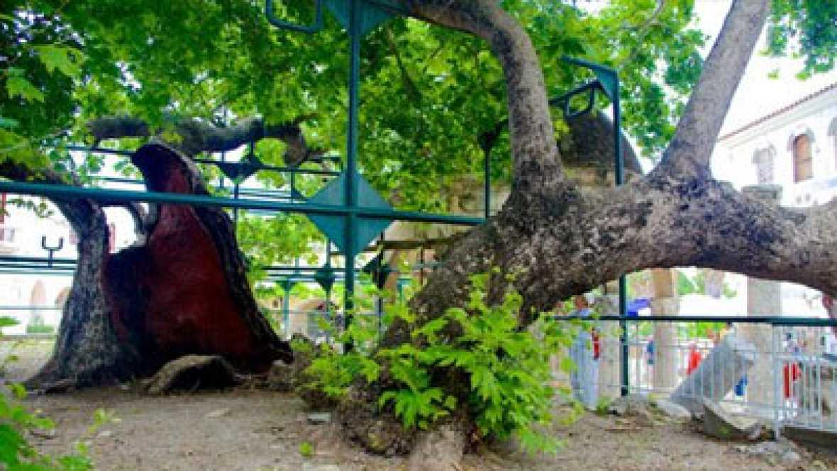 Vida verda - Energia + L'Arbre d'Hipòcrates