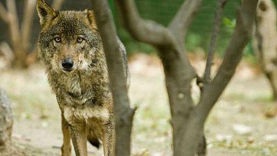 Agro 5 - Cuotas pesqueras, lobos y ganaderia... y la sequía - 11/11/17 - Escuchar ahora
