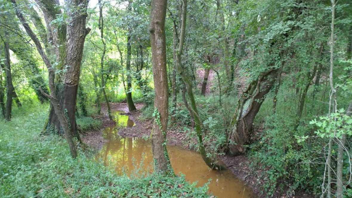 Vida verda - El Bosc Turull i els cultius extensius
