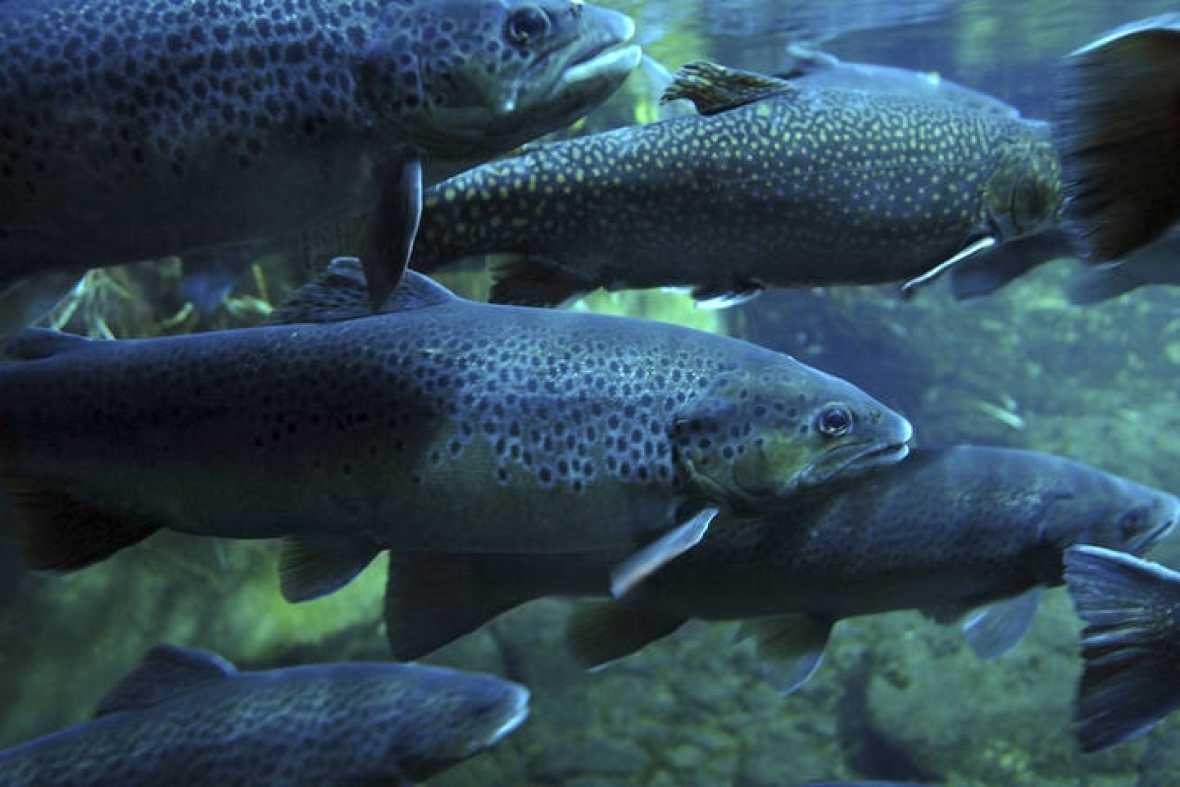 Las cremas solares pueden llevar a la extinci n de los for La reproduccion de los peces