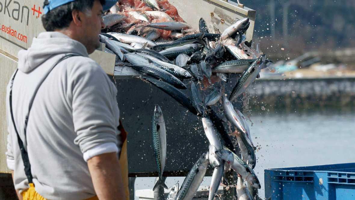 Pescadores descargan las primeras capturas de verdel, también denominado sarda o caballa, en el puerto de Santoña