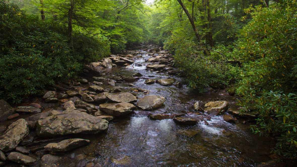 Los fármacos que llegan a los ríos alteran la forma de nadar y comer de organismos