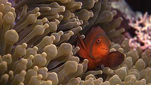 Video La vida en el arrecife (1)