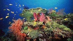 Video La vida en el arrecife (2)