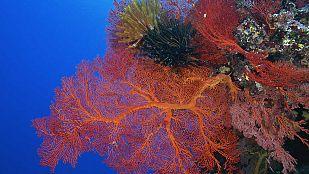 Video La vida en el arrecife (3)