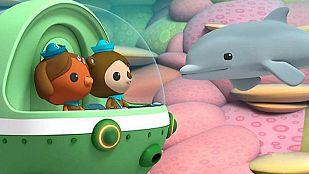 Video La cría del delfín