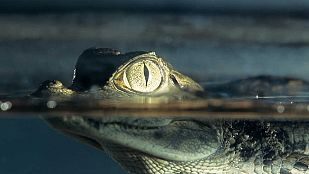 Video Alamto, el paraíso de los reptiles