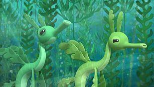 Video Los dragones de mar foliáceos