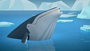Video The humpback whales