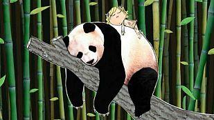 Video Voy a salvar un panda