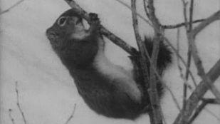 Video Animales en la nieve