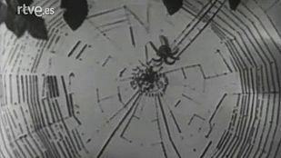 Video Las arañas