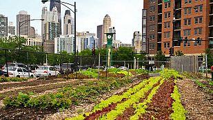 Video Cultivando la ciudad