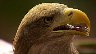 Video Águilas, Reinas de los cielos