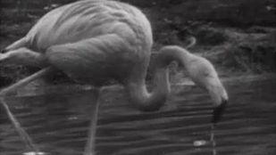 Video La reserva ornitológica