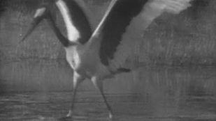 Video El Okavango