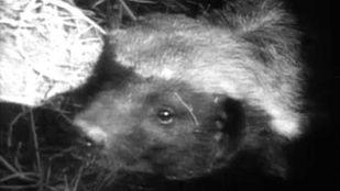 Video Fauna etiópica