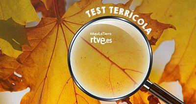 El test del otoño de Aquí la tierra