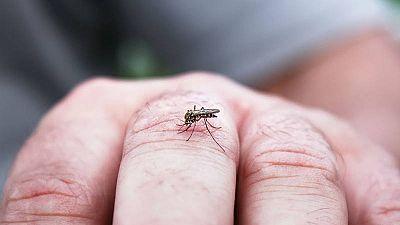 Aquí la tierra - ¿Cómo evitar las picaduras de mosquitos?