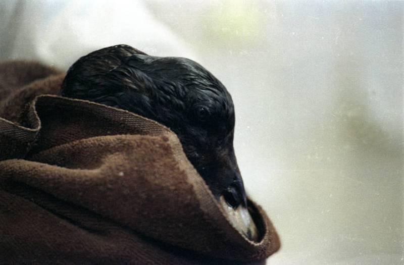 Muchos animales murieron y otros tantos tuvieron que ser ingresados en centros de recuperación después del desastre