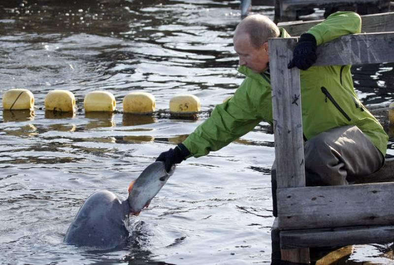 Putin alimenta a una ballena beluga llamada Dasha en las isla de Chkalov el pasado 31 de julio.